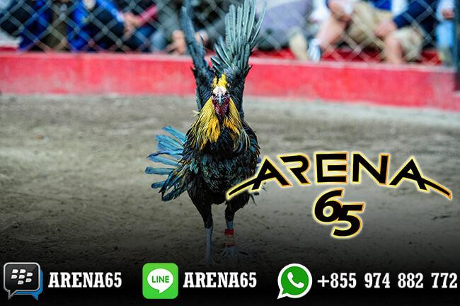 Daftar Akun Sabung Ayam ARENA65 Proses Cepat
