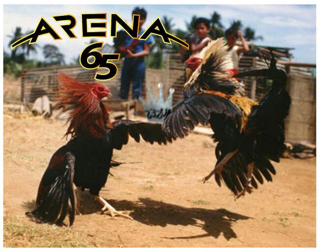 Sabung Ayam Deposit Murah 50 Ribu Rupiah