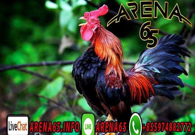 Taruhan Adu Ayam Online