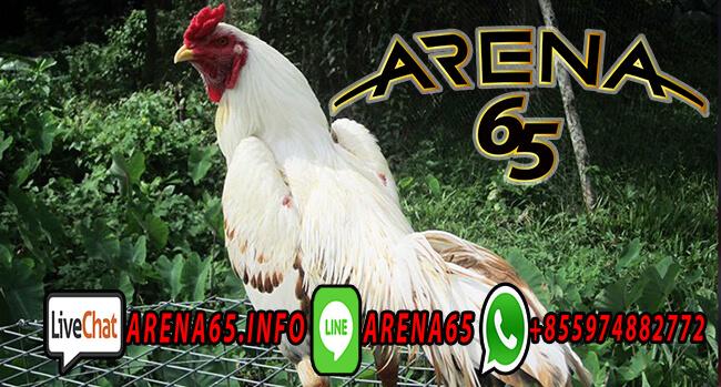 Agen Adu Ayam 8x Win