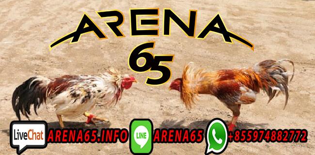Sabung Ayam Pakhoy Online