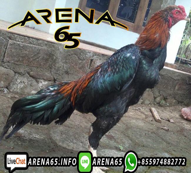 Jenis Taruhan Sabung Ayam S1288